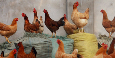 Кейс по управлению репутацией бренда (SERM) для компании-производителя мясной продукции